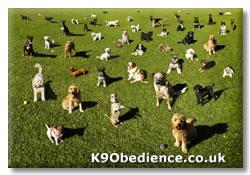 Enough Dogs