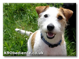 This dog was named after a Parson called John (Jack) Russell who ...