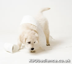 Puppy Toilet Training With Puppy Training Pads