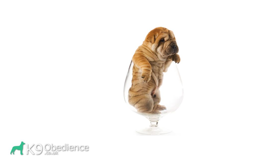 Kennel Club Genetic Dog Diseases